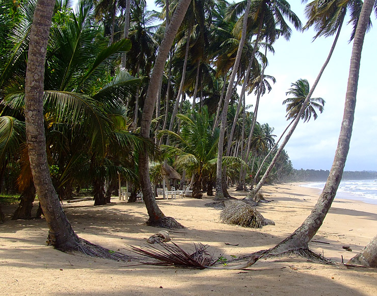 Ghana Beaches and Palm Trees