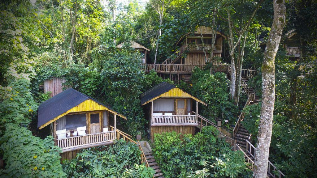 Uganda - 1568 - Bwindi Impenetrable Forest - Buhoma Lodge in the jungle