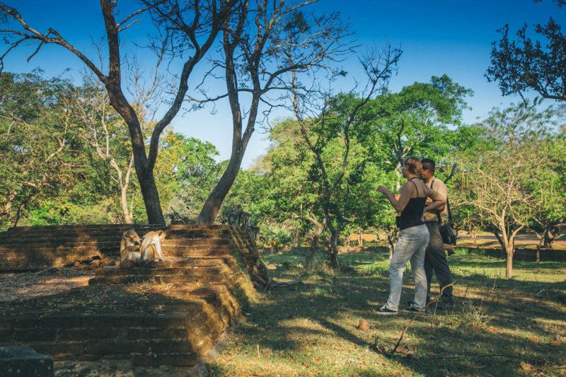 Sri Lanka - 1554 - Polonnaruwa's Primates