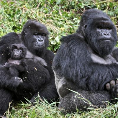 Uganda and Rwanda Ultimate Gorilla Safari