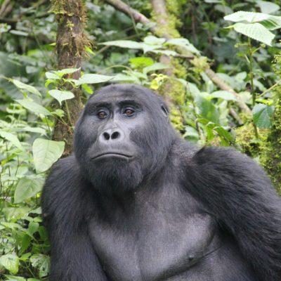 Uganda Luxury Gorilla Fly In Safari