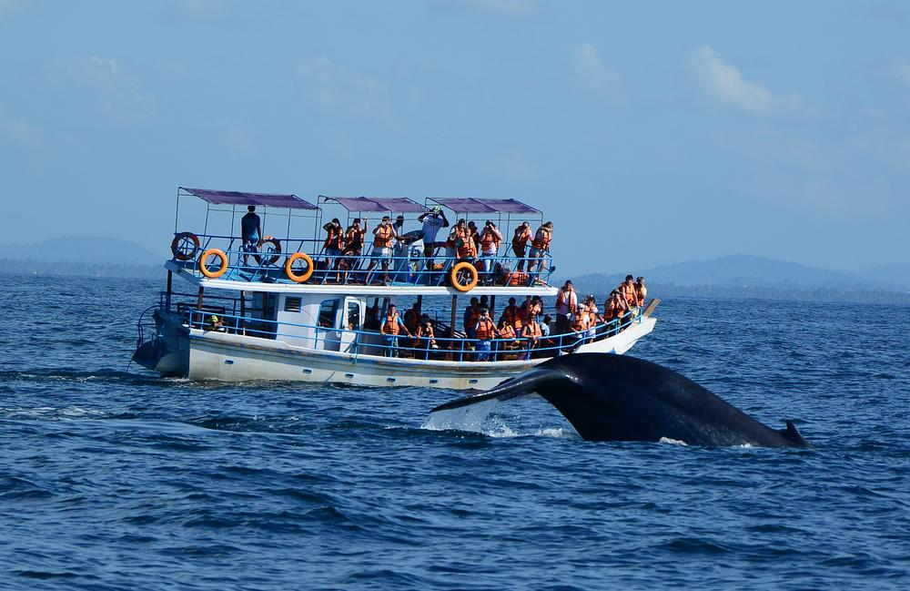 Sri Lanka - 1554 - Whale watching