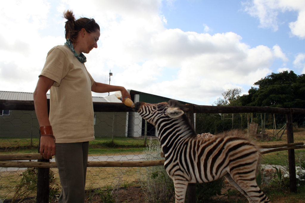 Veterinary Work on South Africa Game Reserve