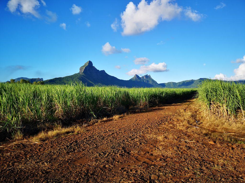Mauritius Sugarcane Fields