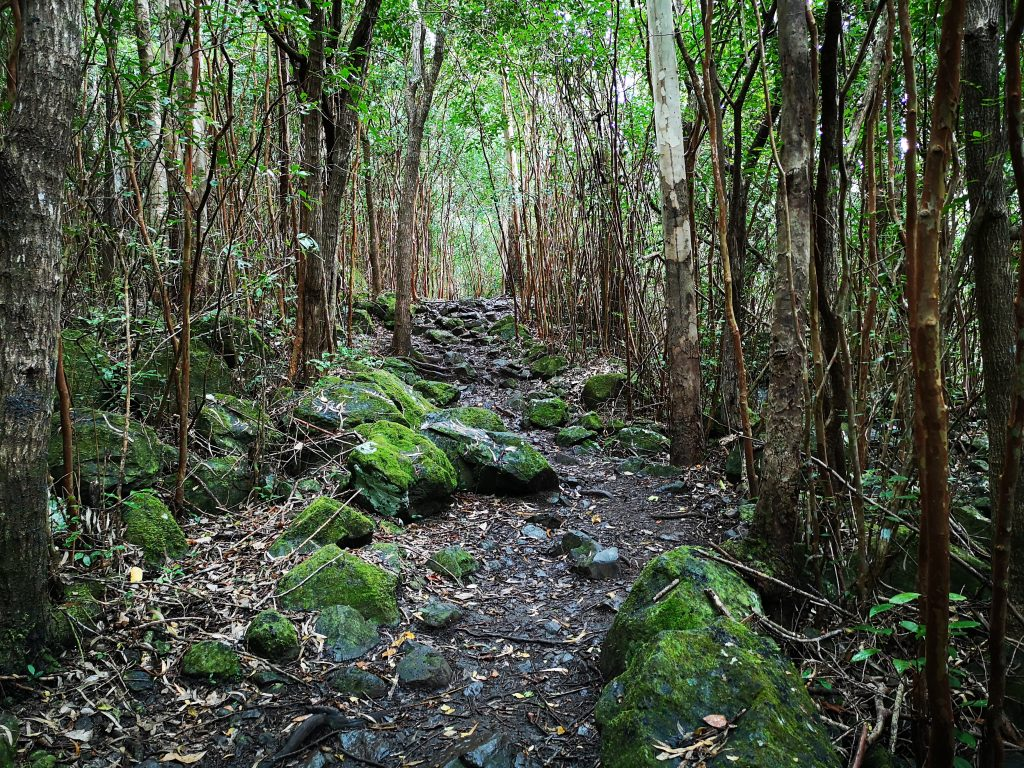Hiking trail in Black River National Park Mauritius