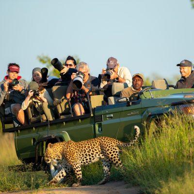 Big Cat Photographic Safari
