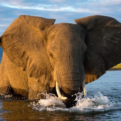 Zimbabwe Safari in Style