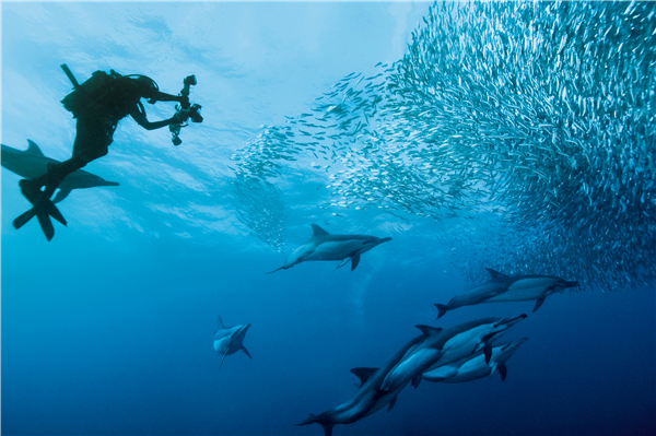 South Africa Tourism - Diving