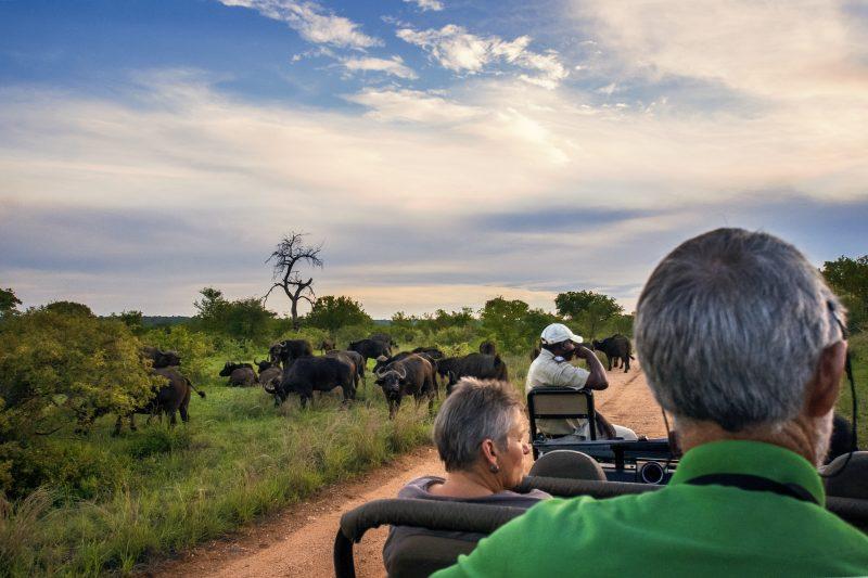 Big Five on Safari South Africa Tourism