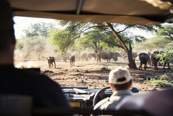 Wildlife Heards on Safari South Africa Tourism