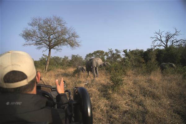 Safari Wildlife South Africa Tourism