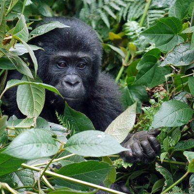 Uganda Private Safari Experience