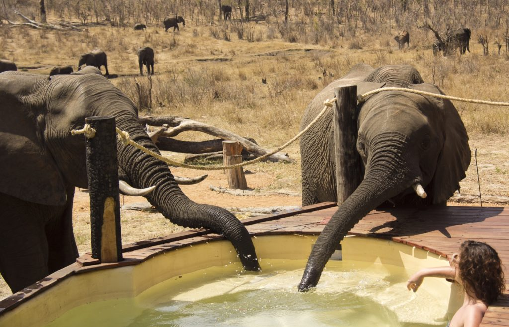 Zimbabwe - Hwange - 1564 - Outdoor Pool with Elephants