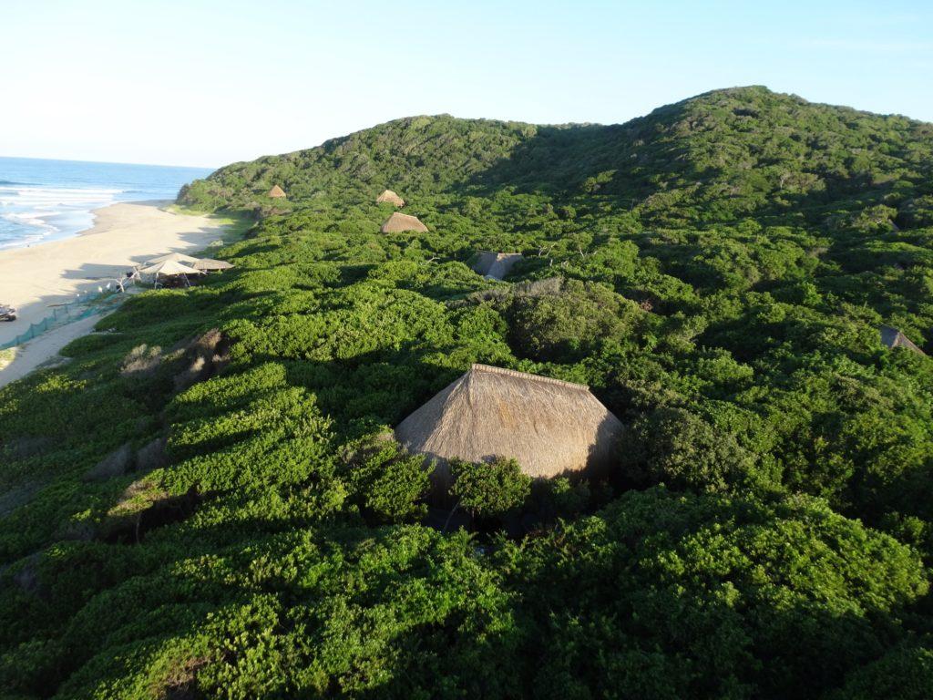 Mozambique - Maputo Elephant Reserve - 11895 - Anvil Bay Lodge amidst Vegetation