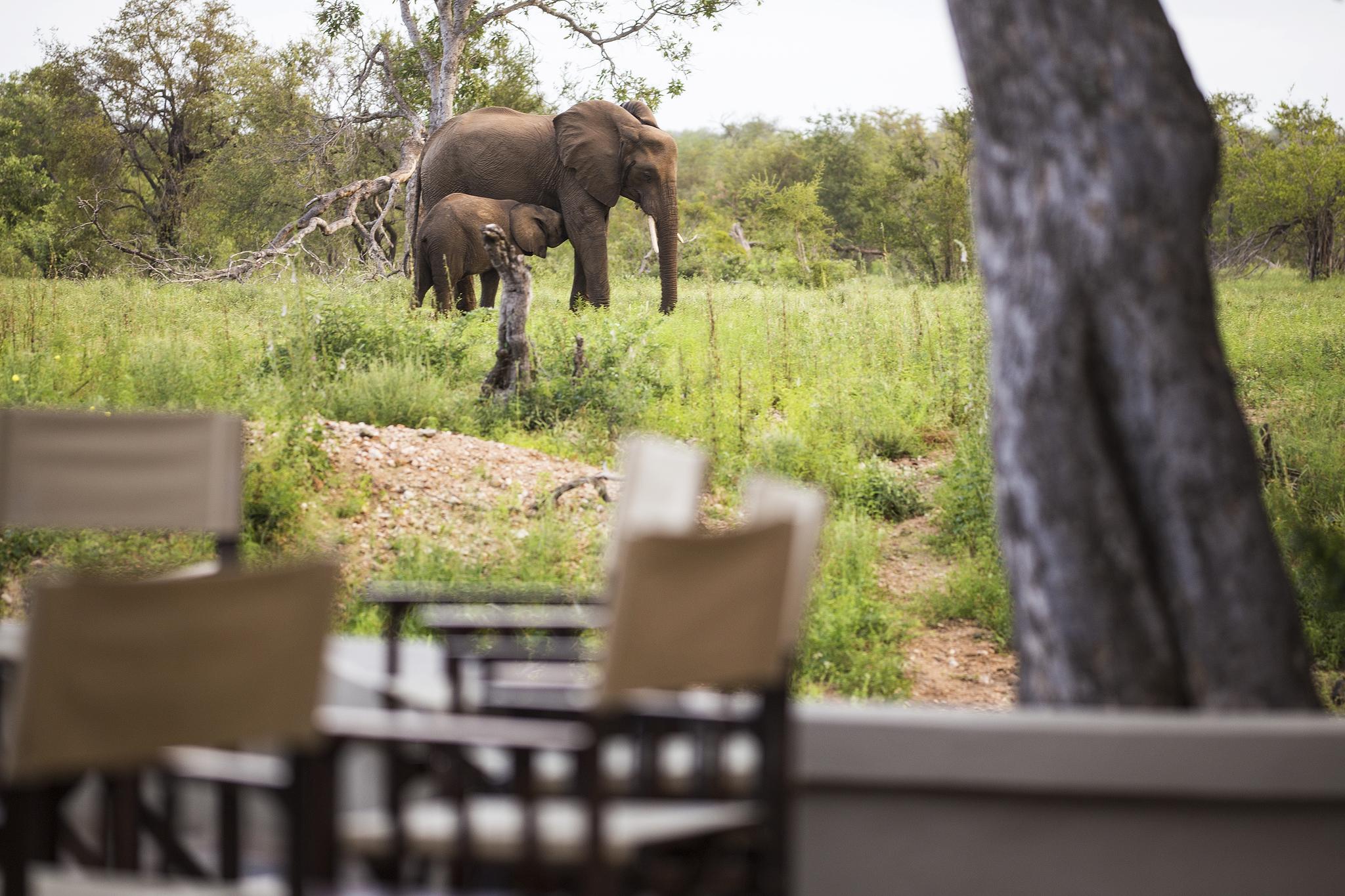 Amani Safari Camp - Wildlife