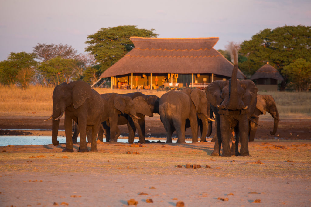 Camp Hwange Zimbabwe Elephants Near Camp