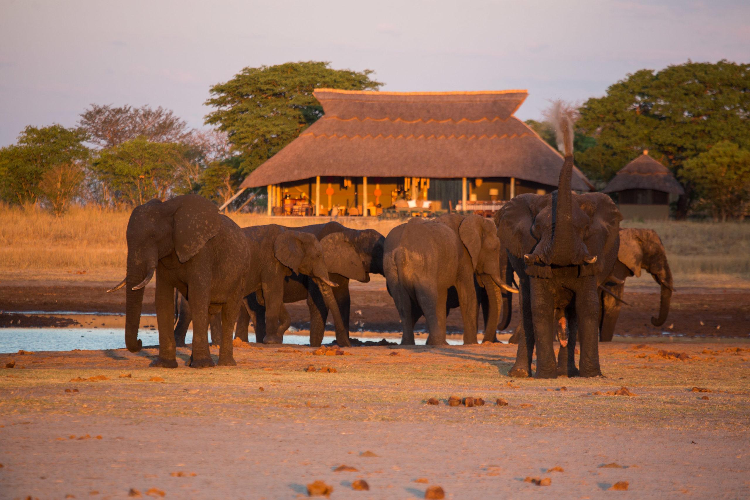 Camp Hwange Zimbabwe Elephants Near Camp