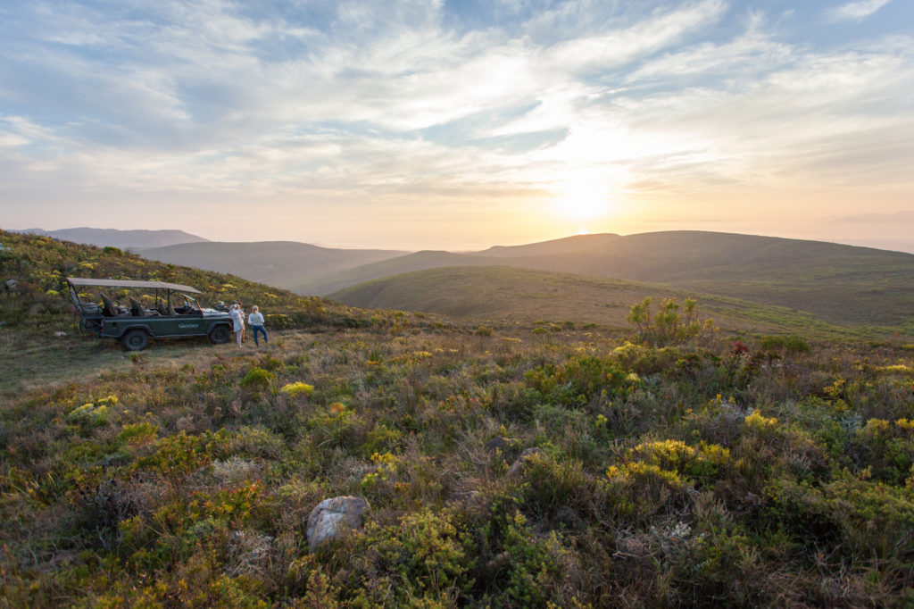 South Africa - Hermanus - Grootbos Forest Lodge - Wildlife experience and flower safari