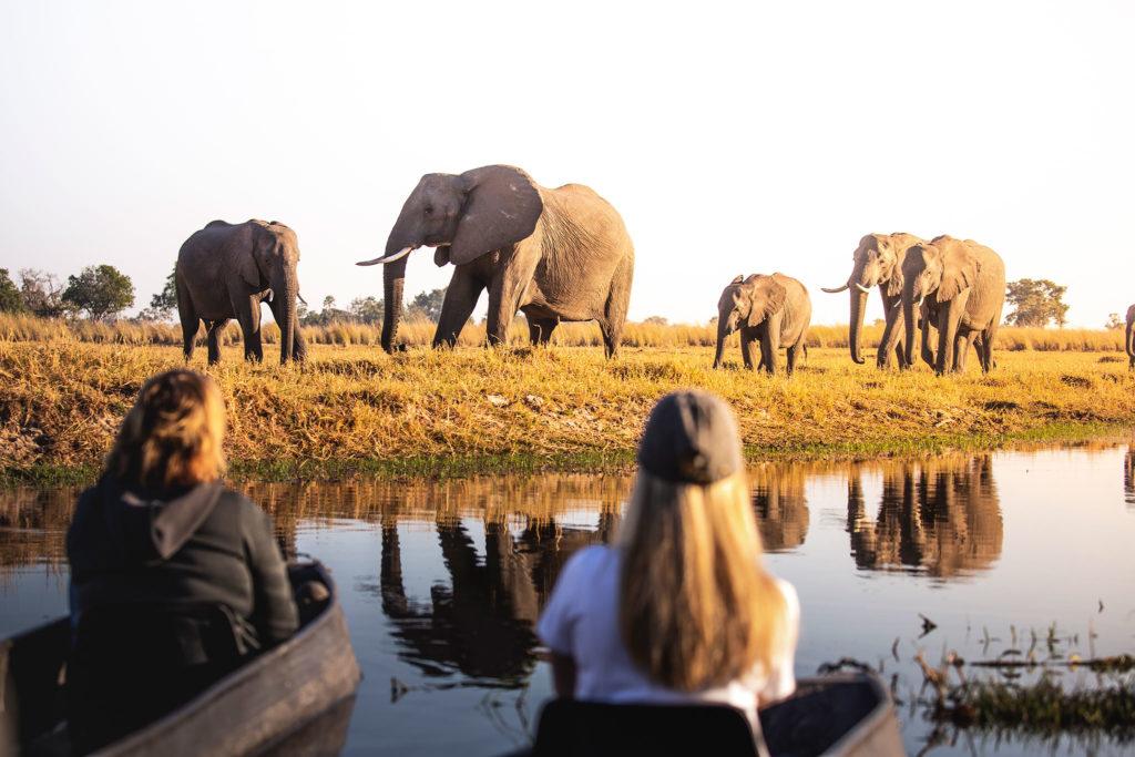 Botswana - Moremi Game Reserve - 1553 - Xaxaba Mobile Camp Elephants close up
