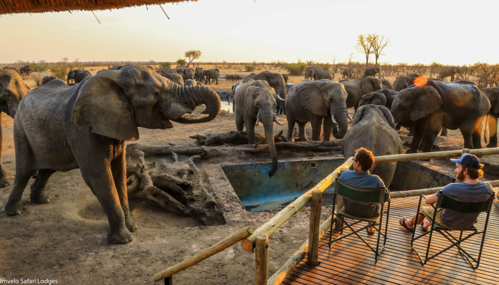 Zimbabwe - Hwange - 1564 - Decking overlooking Elephants