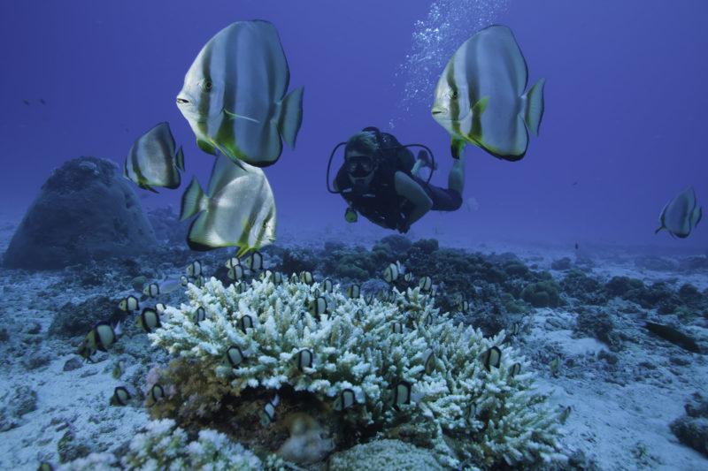 ISeychelles - North Island - 1554 - North Island Resort - Scuba Diving on North Island - Marine Conservation