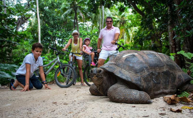 ISeychelles - North Island - 1554 - North Island Resort - Interaction With Giant Aldabra Tortoises