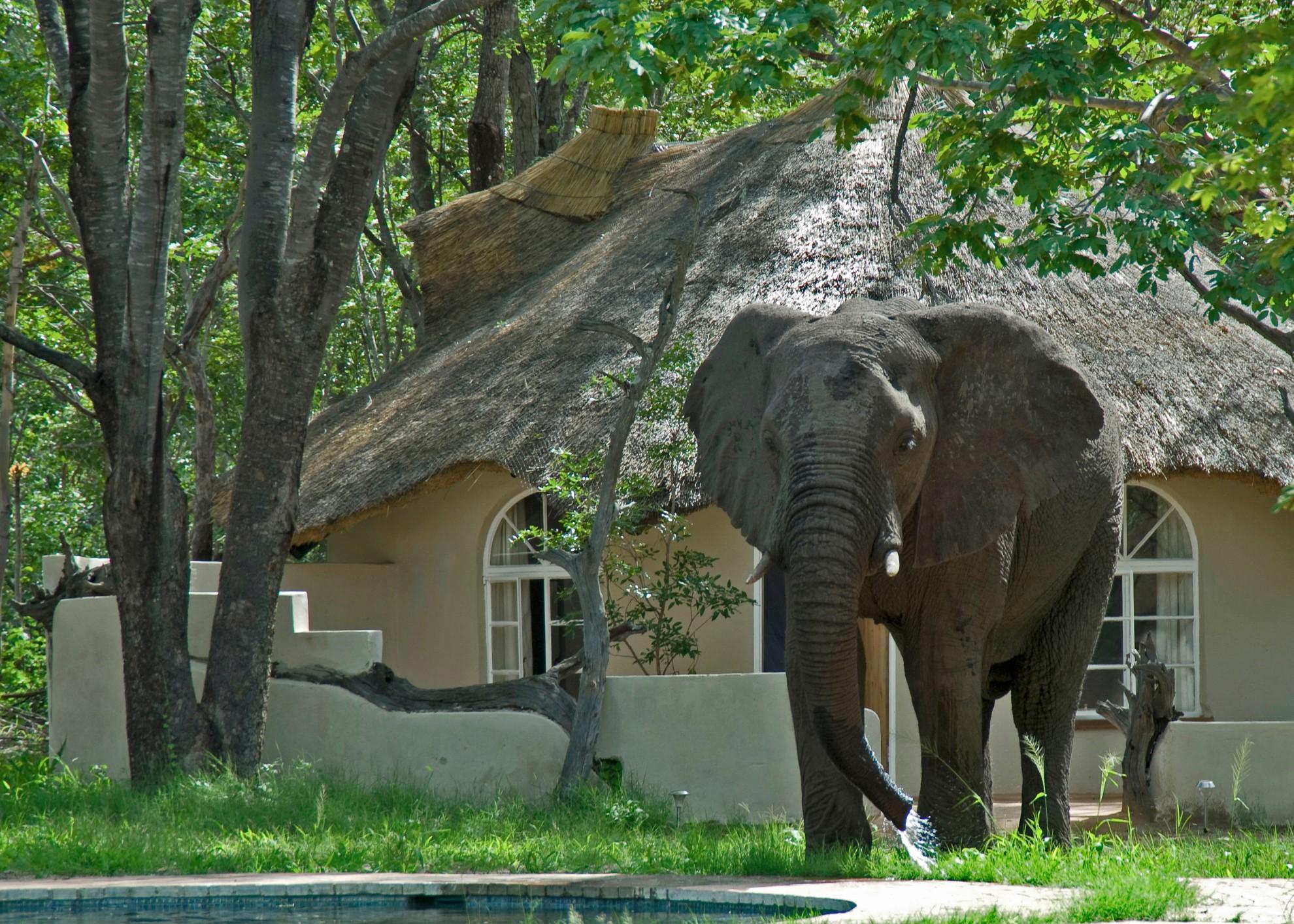 Sable Sands Hwange Zimbabwe Elephant near accommodation