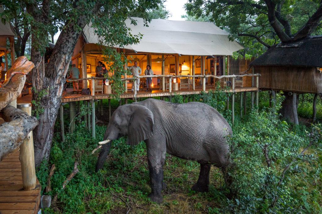 Botswana - Okavango Delta - 1553 - Tubu Tree Camp Elephant close up at the camp