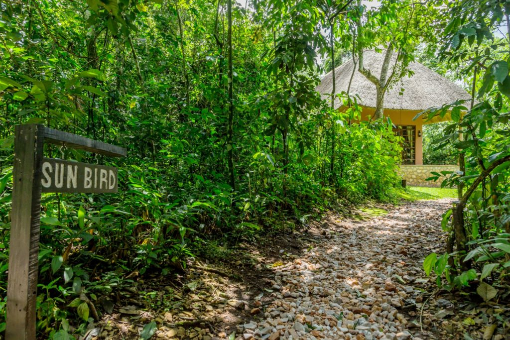 Primate Lodge Kibale Cottage Path