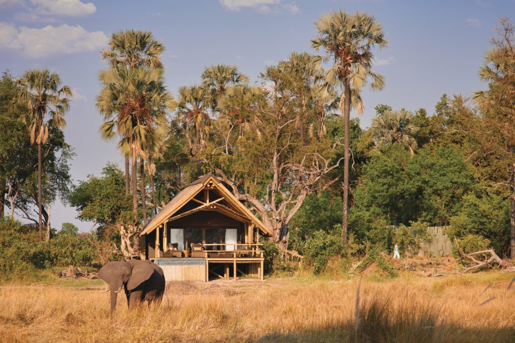 Botswana - Moremi Game Reserve - 1553 - Eagle Island Lodge Okavango - Elephant outside lodge