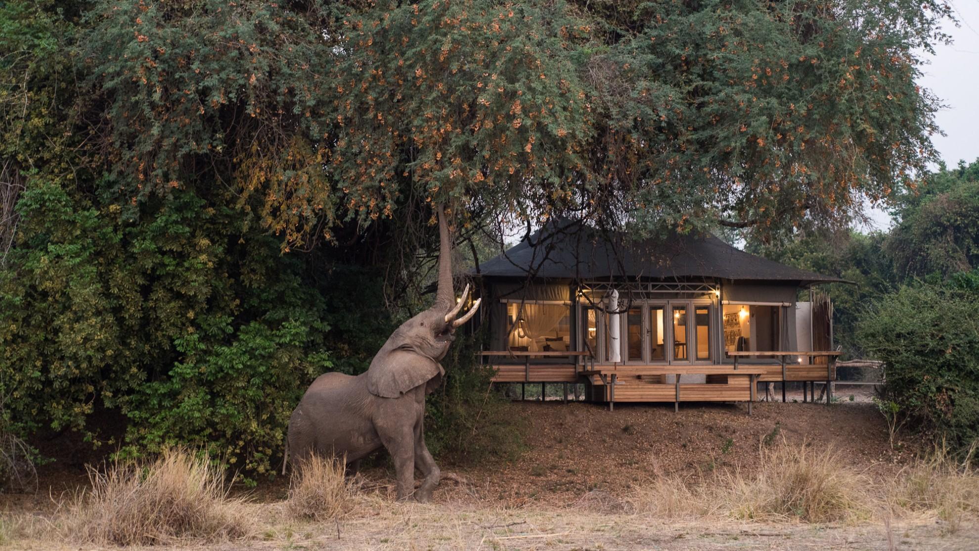 chikwenya_wildlife_elephant eating fruit in front of camp