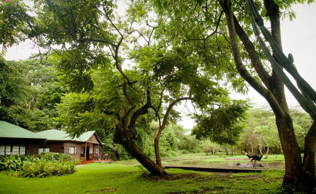 Mount Meru Game Lodge Gardens