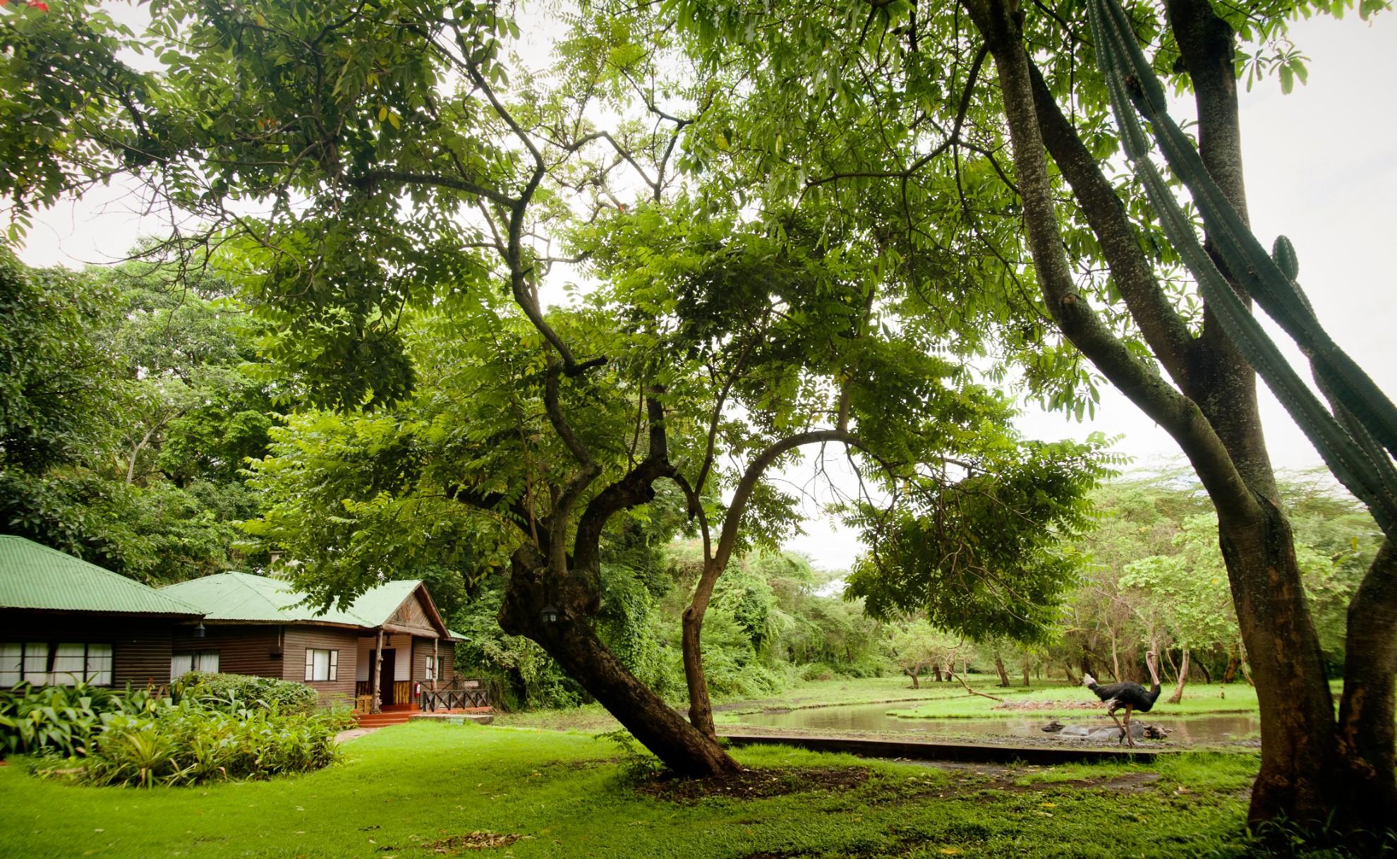 Mount Meru Game Lodge Gardens