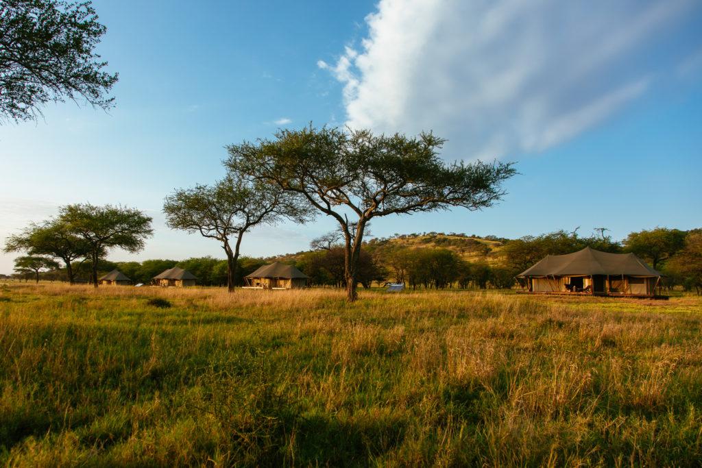 Cherero Camp Grasslands around the camp