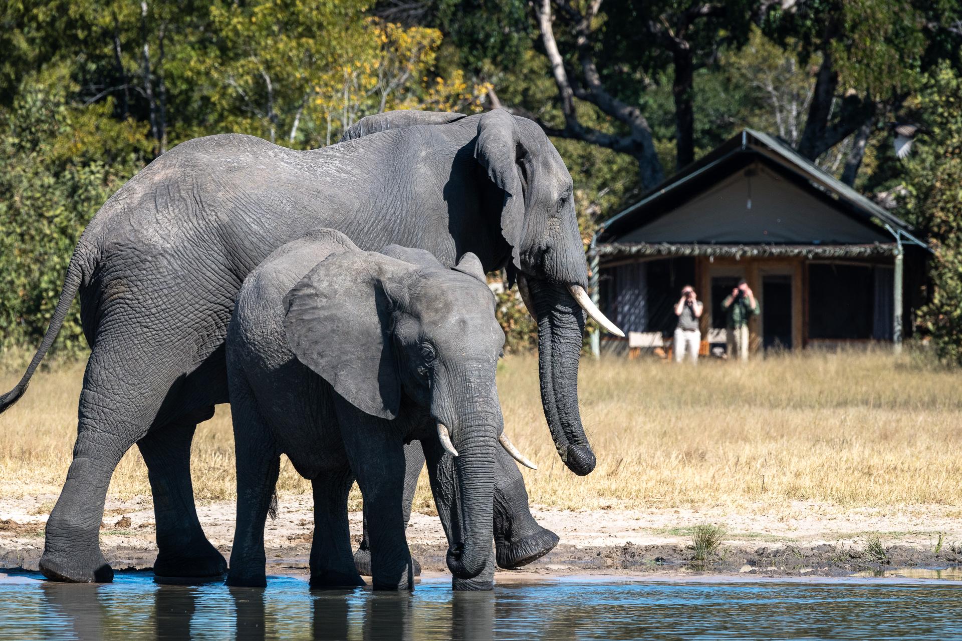 Little Makalolo Camp Hwange Zimbabwe Elephants near the camp