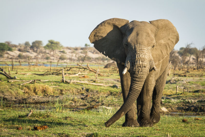 Botswana - Makgadikgadi Pans National Park - 1553 - Leroo La Tau Wildlife - Elephant Sightings