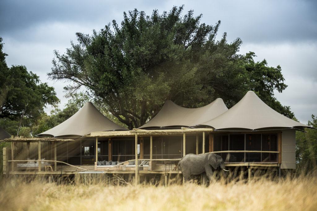 Botswana - Moremi Game Reserve - 1553 - Little Mombo elephant outside camp