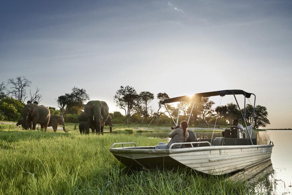 Botswana - Chobe River Front - 1553 - Sanctuary Chobe Chilwero elephants on bank