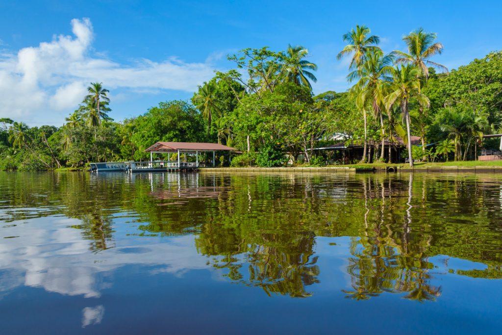 Manatus Tortuguero Costa Rica By the River