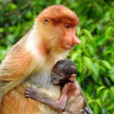 Borneo Wildlife and Culture