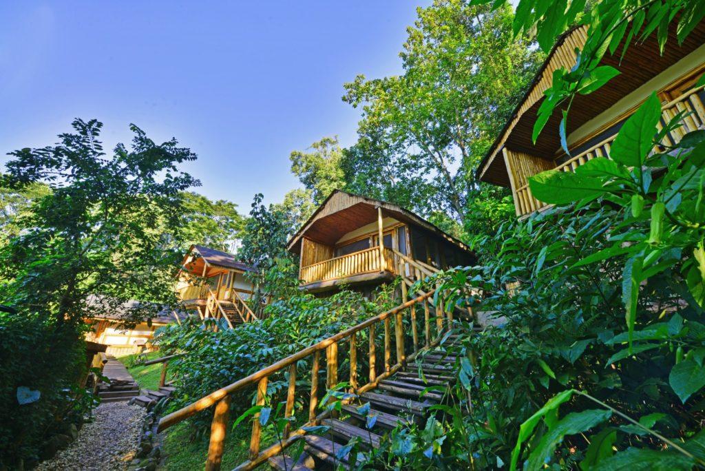 Uganda - 1568 - Bwindi Impenetrable Forest - Buhoma Lodge lodge Steps