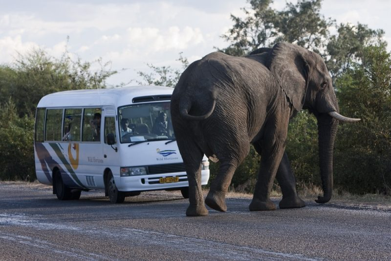 Best of Chobe and Victoria Falls - 1553 - Victoria Falls transfers - Elephant crossing
