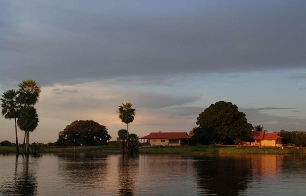 Brazil - Southern Pantanal - 1569 - Fazenda Barranco Alto River Hotel