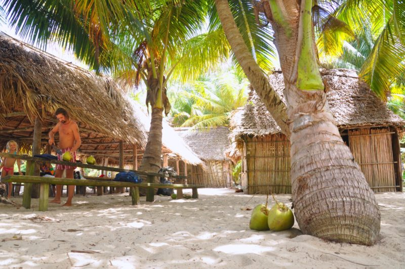 Honduras Highlights - 10024 - Punta Sal, Atlantida - Beach Coconuts