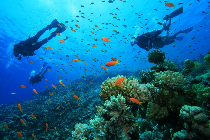 Honduras Adventure - 10024 - Roatan - Scuba Diving