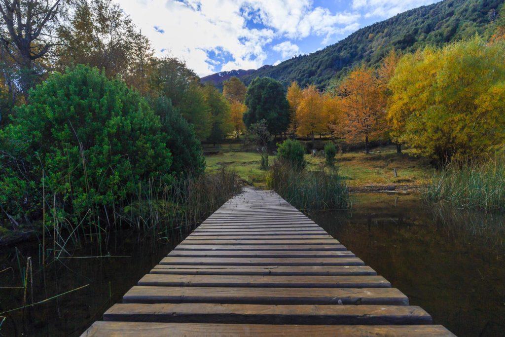Chile - 1560 - HUERQUEHUE national park adventure experience