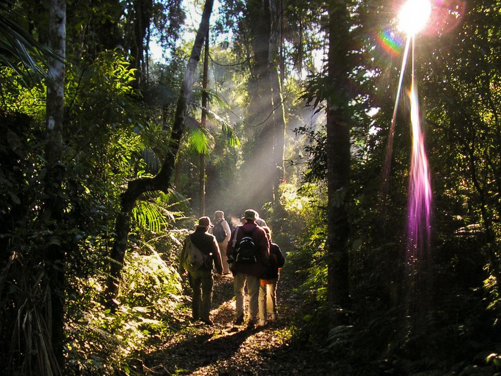 Argentina - 1584 - Jungle Trails Yacutinga Lodge - Iguazú - Guided Walks
