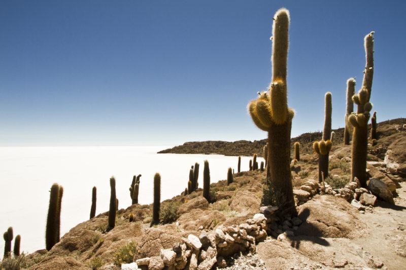 Bolivia - 1561 - Community Program - Salar de Uyuni Cacti Island