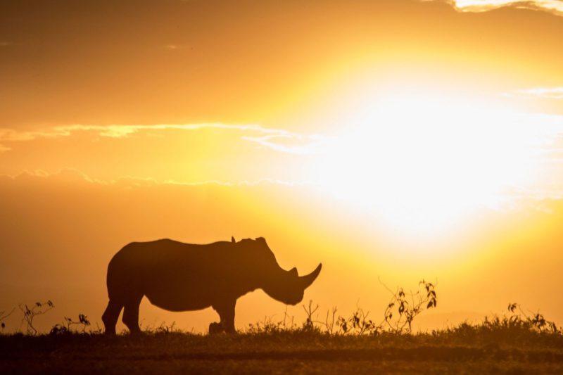 Kenya - 12890 - Rhino silhouette - African Sunset