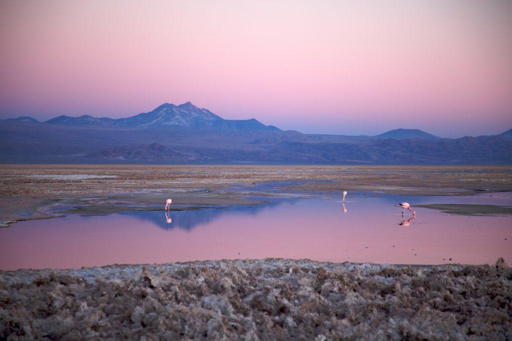 Chile - 1560 - San Pedro de Atacama - At Dusk - Nicolas de Camaret